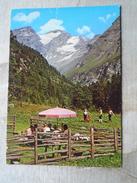 D146641 Austria  -Radeckalm - Böckstein Badgastein - Bad Gastein