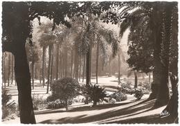 Monte-Carlo - Contre-jour Sur Les Jardins - Carte Photo - 1951 - Exotic Garden