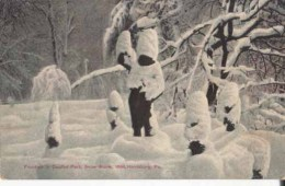 Etats Unis  Pa  - Harrisburg - 2 Cartes Snow Storn In Capitol Park 1894   : Achat Immédiat - Harrisburg