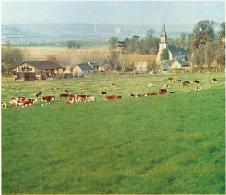 Photo (1972) : EURE, Conquis Sur La Seine, Le Marais Vernier, Face à Tancarville  (11,5 Cm X 13 Cm) Vaches - Vieux Papiers