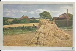 AK 0624  Lachende Fluren : Sommertag - Naturfarbenphotographie System Prof. Miethe Um 1910-20