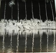 Regates Au Patis Abbeville - Négatif Sur Plaque De Verre 6X6,5cm Bien Lire Descriptif - Glasdias