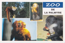 Zoo De La Palmyre Tamarin Lion Doré... - France