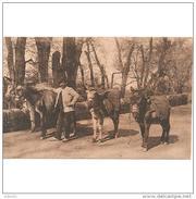 GNDTP6450CPA-LFTMC571TABU.Tarjeta Postal DE GRANADA.Arboles,ANIMALES,CARRETERA DE LA SIERRA..BURRERO CON 4 BURROS - Burros
