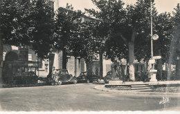 04 // MANOSQUE    Boulevard De La Plaine   CPSM Edit Tardy - Manosque