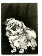Cp - CHIEN - Pékinois - Pub Médicale Génoline - Hunde