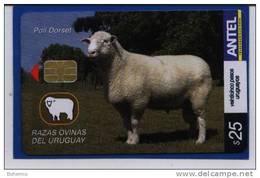 Uruguay TC440a Razas Ovinas -Poll Dorset-