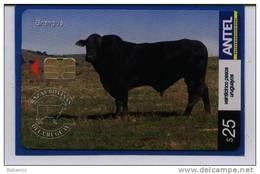 Uruguay TC435a -Razas Bovinas, Brangus-