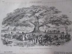 Gravure 1867 Nicaragua   PLAO DE  GENISERO  NAGAROTE Arbre Centenaire Tree Old - Nicaragua