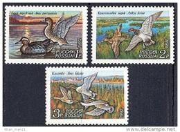 Russia, 1992, Ducks, MNH