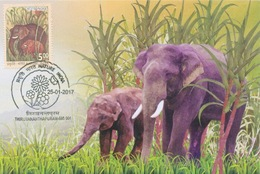 Maximum Card - Indian Elephant Forest Mother Nature