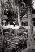 Photo Originale Scène De Vie En Asie - Cochon En Liberté, Mare Et Palmiers - Enfants - Vietnam ? - Luoghi