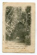 CPA  Algérie :  Alger Jardin  1902 Pour Famille Oget à Roquignt Par Draize La Romagne    VOIR  DESCRIPTIF  §§§ - Alger