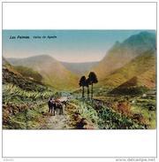 LPMTP7935CPA-LFTD9075TABU.Tarjeta Postal De GRAN CANARIAS.Casas,campo,arboles,BURROS,burrero Y El VALLE DE AGAETE - Burros