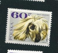 N° 1750 Chien Lévrier Afghan    Timbre   Pologne Oblitéré/neuf   Polska 1968
