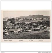 NVRRTP9706CPA-LFT2978TACA.Tarjeta Postal DE NAVARRA.Arboles,campo,animales,CABRAS..VISTA PARCIAL DE BUERGUETE - Cebras