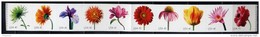 USA 2007 4282-4292 FLOWERS