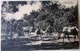CPA-KP-PC- Erytree - COLONIA ITALIANA -- CAROVANA NEL CAROBEL AGODART 1908 - Erythrée