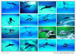 36 Postcards Of Dolphin Dolphins Sea Animal Angel , Postkarte Carte Postale - Dauphins