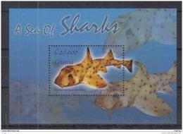 T31 Ghana - MNH - Marine Life