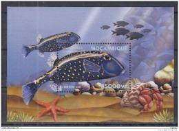 T31 Mozambique - MNH - Marine Life