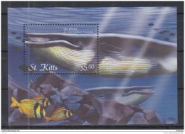 T31 St Kitts - MNH - Marine Life