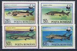 MDW-BK1-027 MDN MINT PF/MNH ¤ ROMANIA 1994 4w In Serie ¤ WWF - FISH - ENDANGERED ANIMALS