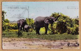Mtp104 ELEPHANTS Faune Africaine 1959 De BAMAKO Mali Afrique Occidentale à PALLARES Ciné-Vox Agde / HOA-QUI 2310 - Mali