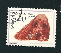 N° 1232 Chien Cocker Spaniel   Timbre  Pologne Oblitéré/neuf   Polska 1963
