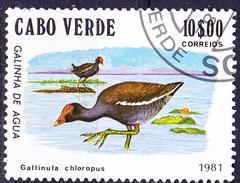 Kap Verde - Teichhuhn (Gallinula Chloropus) (MiNr: 448) 1981 - Gest Used Obl