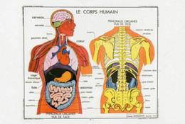 Postcard - Art Of Instruction - Human Body 1953 - New - Unclassified