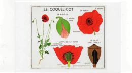 Postcard - Art Of Instruction - Poppy 1955  New - Cartoline