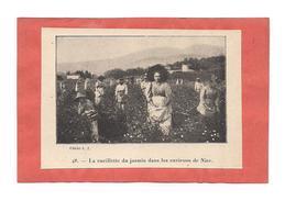 EX LIBRIS  La Cueillette Du Jasmin Dans Les Environs De Nice - - Ex-libris