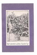 EX LIBRIS  RECOLTE DES DRUPES DU CAFEIER - Les Graines De Ces Drupes....donneront Le Café - - Ex-libris