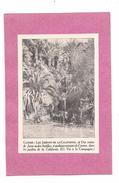 EX LIBRIS   CANNES LES JARDINS DE LA CALIFORNIE - Une Vision De Java Ou Des Antilles .. - Ex-libris