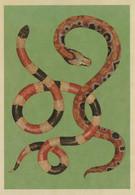Postcard - Animalium - Arizona Coral Snake,Blood Python New - Postcards
