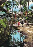 Algérie Collection Artistique L´Afrique-Dans L´Oasis (CIM Combier Cliché R.PROUHO 1327)*PRIX FIXE