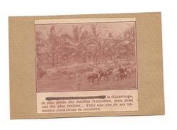 EX LIBRIS  LA GUADELOUPE La Plus Petite Des Antilles Françaises - Plantations De Cocotiers - - Ex-libris