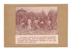 EX LIBRIS LA CANNE A SUCRE Principale Production De La GUADELOUPE - - Ex-libris