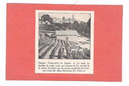EX LIBRIS GRASSE - CUEILLETTE DU JASMIN - - Ex-libris