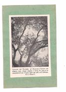 EX LIBRIS GAULAGE DES OLIVIERS - - Ex-libris