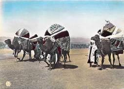 Algérie Scènes Et Types D'Afrique Du Nord Les Bassours (chameaux Camel)(Editions : Alexandre Sirecki /Oran 30)*PRIX FIXE