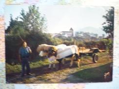 Pays Basque / Attelage Basque - Autres