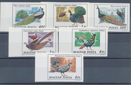 1977. Peacocks - Imperforated :)