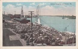 Etats-Unis - Savannah - Cotton Shipping - Port Bâteaux Coton - Savannah