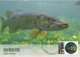 D28796 CARTE MAXIMUM CARD FD 2015 NETHERLANDS - SNOEK PIKE BROCHET CP ORIGINAL