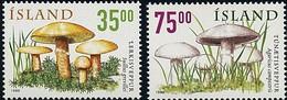 ISLANDE - Suillus Grevillei - Agaricus Campestris