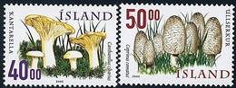 ISLANDE - Cantharellus Cibarius - Coprinus Comatus