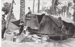Una Tank Fra I Palmizi In Palestina     (A-20-110319)