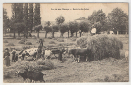 LA VIE AUX CHAMPS - Rentrée Des Foins - Cultivation